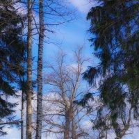 Волшебные деревья. :: Вячеслав Криволуцкий