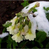 Зимние причуды в апреле.. :: Антонина Гугаева