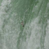 чайка на фоне водопада :: Naum