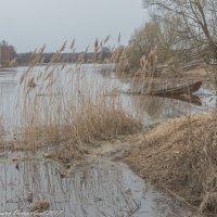 Апрельская река Дубна :: Виктор Евстратов