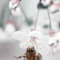 сон пчелы :: Анна Чернобай