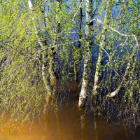 Запахло клейкою листвою... :: Лесо-Вед (Баранов)