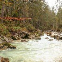 Волшебный лес :: Наталья Рыжкова