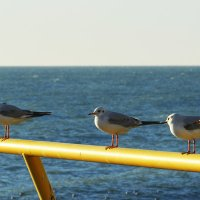 Чайки и Море... :: Дмитрий Петренко