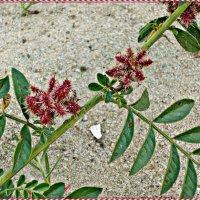 Весной все цветет! :: Надежда