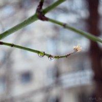 Капли на ветках :: Надежда Крылова