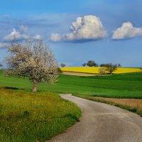 дорога в Весну :: Elena Wymann