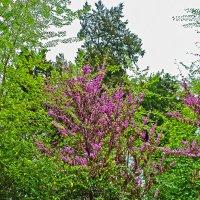 Весной в ботаническом саду :: Светлана