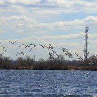 Птицы :: Валерий Самородов