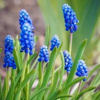 Такие вот чудесные цветы :: Игорь Касьяненко