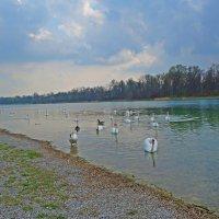Лебединое озеро! .. :: Galina Dzubina