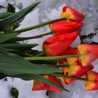Пришла зима а цветочки мои мёрзнут 19 апреля 2017 :: Роза Бара