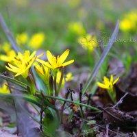 Весна пришла.. :: Олеся Чубаренко