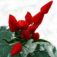 композиция зимы :: Роза Бара
