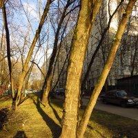 Солнечно, но холодно! :: Андрей Лукьянов