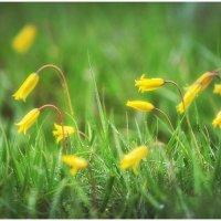 На лугу цветы в росе нежно распускаются, неземной красой своей  пред творцом склоняются :: Антон Сологубов