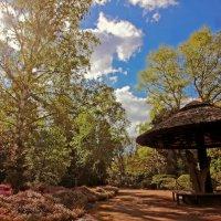 Солнечно в парке :: Alexander Andronik