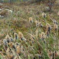 Весна на болотах :: Александра Романова