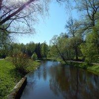 Май в Павловске. :: Лариса (Phinikia) Двойникова
