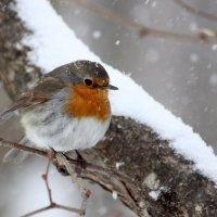 Весенняя зима :: Ната Волга