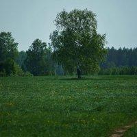 Во поле березка стояла :: Геннадий Федоров