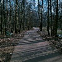 Весенний день в парке :: Михаил Рогожин
