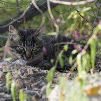 Бездомные коты г. Артём :: Сергей Бойко