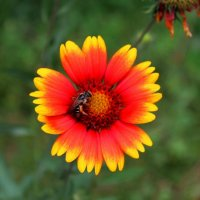 цветы :: Горкун Ольга Николаевна