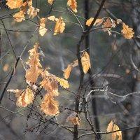Прошлогодние листья :: cfysx