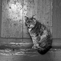 Она ушла, но обещала вернуться :: Я Сурико