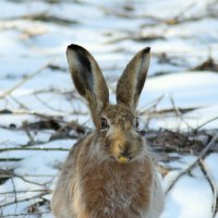 Заяц и цветочка  :: Борис E