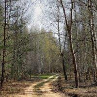 Ожидая майских перемен... :: Лесо-Вед (Баранов)