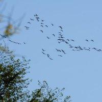 прилет :: linnud