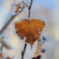 Ледяное сердце :: Александр Севастьянов