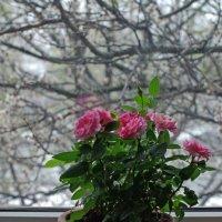 А за вікном йде сніг And outside the window it's snowing А за окном идет снег :: Игорь Шубовичь