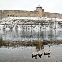 Лебеди :: Marina Pavlova