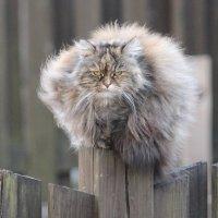 Когда на душе кошки скребут )) :: Semko