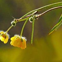 Цветочки :: Alexander Andronik