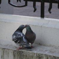 Любовь и голуби :: Inna Vicente Rivas