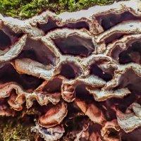 грибы :: Лариса Батурова