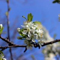 Маленькое чудо весны :: Татьяна Пальчикова