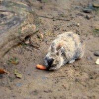 кролик :: Miko Baltiyskiy