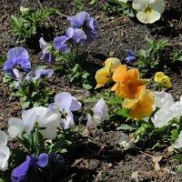 цветы на земле 3 :: Валерий Дворников