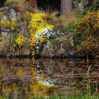 Краски флоры :: Alexander Andronik