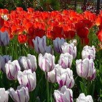 Апрельские цветы :: Александр Грищенко