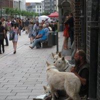 Безработный пастух :: Tanja Gerster