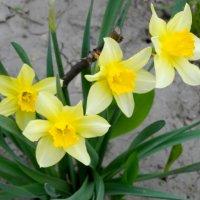 Приметы апреля... :: Тамара (st.tamara)