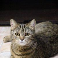 Моя любовь*Кошка-Руна :: Руслана Алентьева