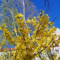 Какое небо голубое!!! :: Валерия Комова