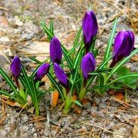 Здравствуй весна :: Игорь Баринов